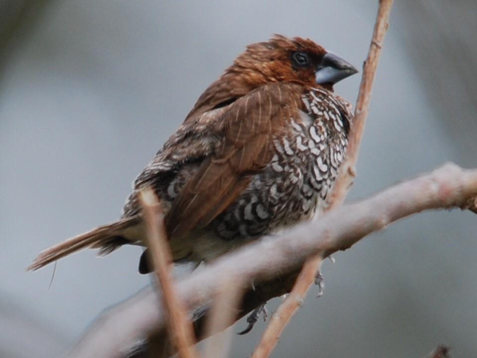 un oiseau - ajonc le 11 mars Bravo Martine   2601484817174